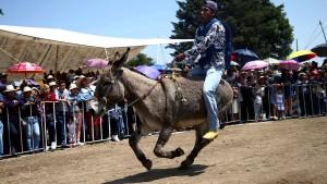 So feiert Mexiko seine Esel am 1. Mai