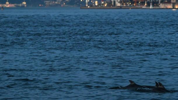 Delfine erobern Bosporus zurück