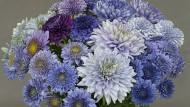 Die blaue Blume gilt als zentrales Motiv in der Literatur der  Romantik (Archivbild).