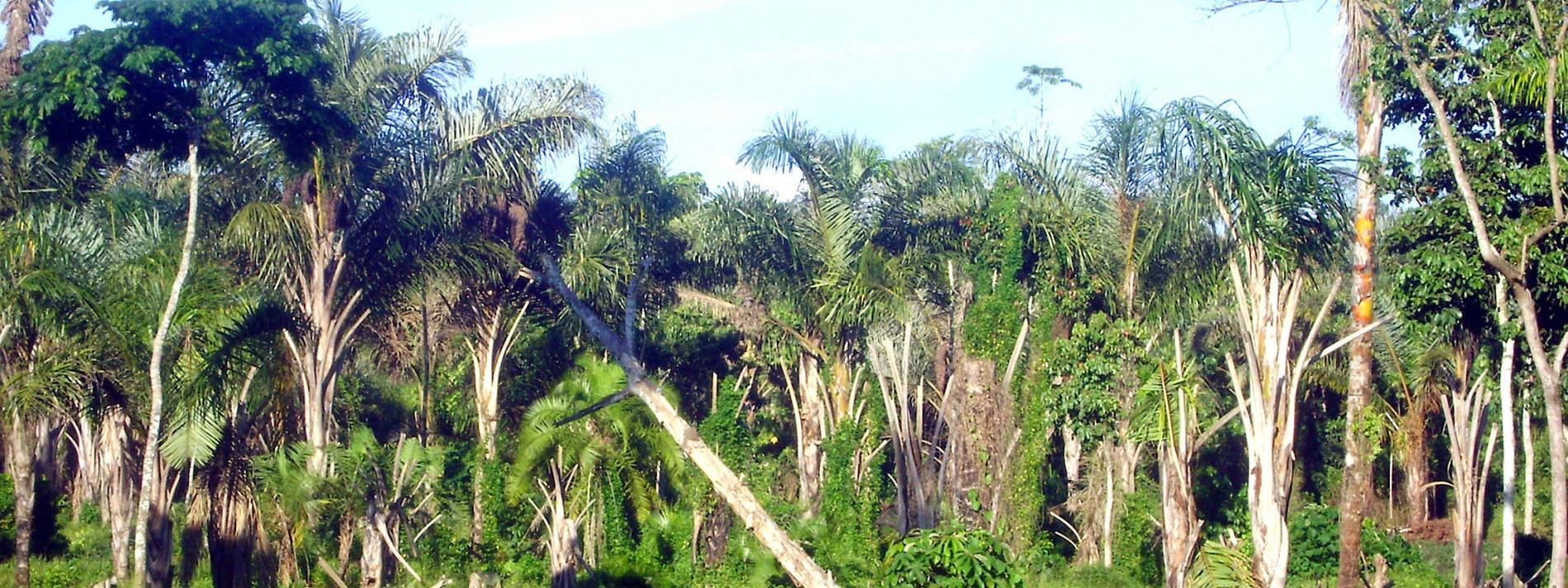 Afrika wird zum Hotspot der Abholzung