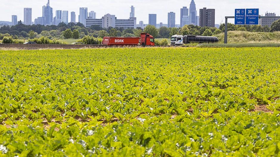 Bisher noch Acker an der Autobahn: Hier soll Frankfurts neuer Stadtteil im Nordwesten der Stadt entstehen.
