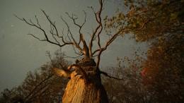 """""""Das geheime Leben der Bäume"""""""