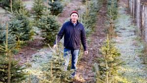Spätlese im Weihnachtsbaumwald