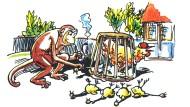 Ein für die Autobauer entlastender Tierversuch: Affen vertragen Qualm besser als Hühner.