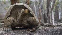 Jonathan die Riesenschildkröte