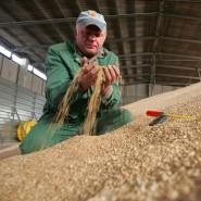 Weizenprüfung bei KTG Agrar: Die Insolvenz war ein Fanal für Vorstände.
