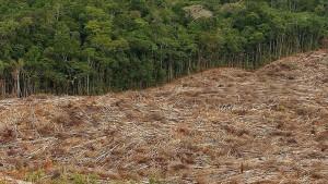 Knapp zwölf Millionen Hektar tropischer Wald zerstört