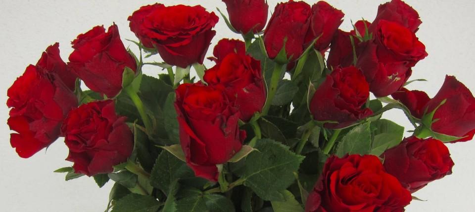 Muttertag 2016 Blumen Von Fleurop Blume 2000 Co Im Test