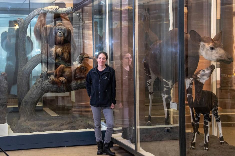 Tierisch gut: Julia Lechler, Aufsicht im Senckenberg Naturmusem in Frankfurt, ist fasziniert von einer Orang-Utan-Plastik von Herman ter Meer
