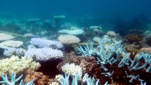 Australien pumpt mehr Geld in Erhalt des Great Barrier Reef