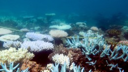 Australien pumpt mehr Geld in Erhalt des Great Barrier Reef