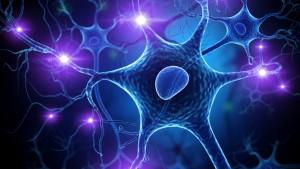 Was tut das Gehirn, wenn es spricht?