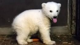 Berlin hat ein neues Eisbärenbaby