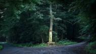 Der Hinterlandswald ist das größte zusammenhängende und unzerschnittene Waldgebiet in Hessen