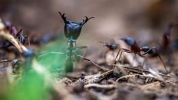 Was wir von Ameisen lernen können