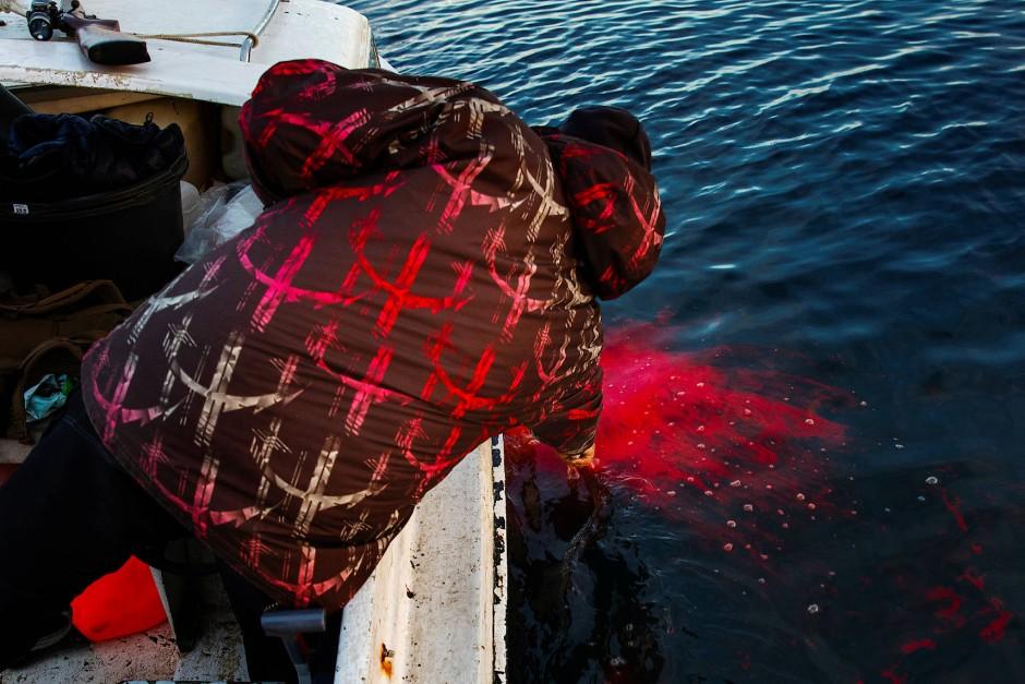 Der Fang ist gelungen: Henrik Josvasson zieht eine erlegte Robbe aus dem Wasser.