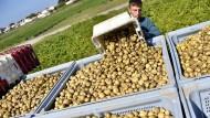 500 Euro für ein Kilo Kartoffeln