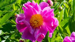 Blühende Schönheiten