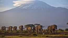 Führt bald eine Seilbahn zum Kilimandscharo?