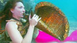 Konzert für Fische und Korallen