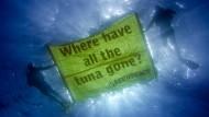 """""""Wo sind all die Thunfische hin?"""": Greenpeace-Protest gegen Überfischung"""