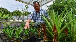 Deutscher Forscher simuliert in Panama Erderwärmung