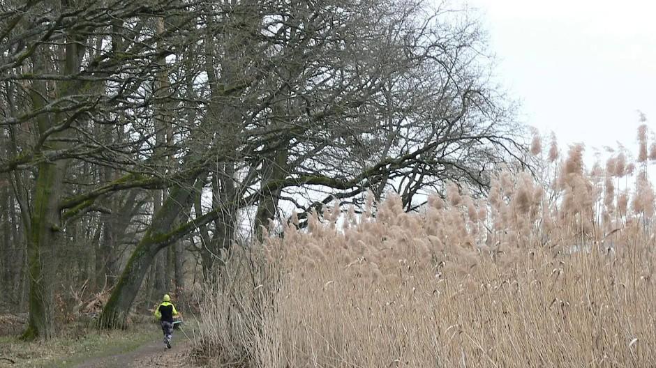 Wo einst Weiden lagen, erstrecken sich jetzt naturgeschützte Röhrichtzonen und Feuchtbiotope.