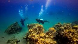Wie Aktivisten verschmutze Riffe säubern