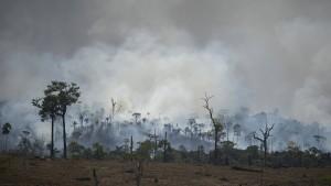 Bolsonaro verbietet Brandrodung für 60 Tage
