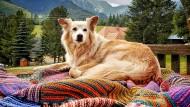 Der Star des Hauses: Hostelhund Wally ist unwiderstehlich.