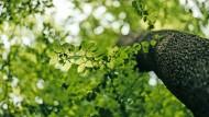 Hebt die Stimmung und baut Stress ab: Waldspaziergänge als medizinische Maßnahme