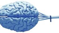 Was der Künstlichen Intelligenz zum menschlichen Gehirn fehlt