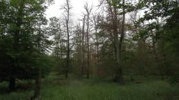 Ein Drittel des Waldes ist deutlich geschädigt