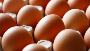 Fipronil-Eier in mehrere Bundesländer ausgeliefert