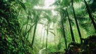 Die indigenen Bewohnern des Amazonas kämpfen für den Schutz des Regenwaldes