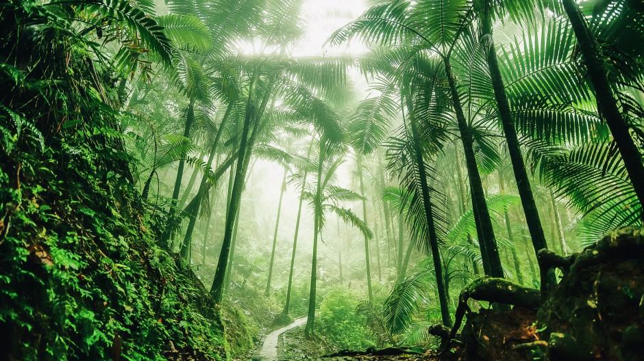 Der tropische Regenwald ist ein mächtiger Faktor für die Stabilität des Weltklimas, und in ihm leben viele Millionen indigener Bewohner.