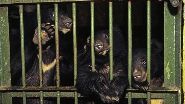Die stillen Schreie der Gallenbären