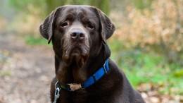 Bundeswehr-Hunde sollen Corona-Infektionen erschnüffeln