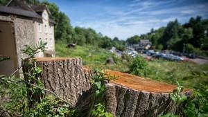 Sorge um Bäume und Stadtbild