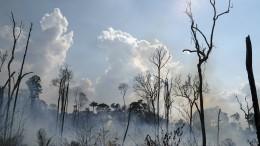 Brasiliens Polizei ermittelt gegen Brandstifter