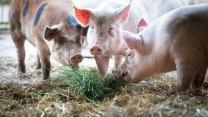 Schweinefleisch müsste doppelt so viel kosten