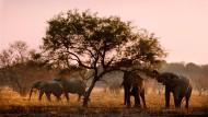 Wilderer sind hinter ihren Stoßzähnen her: Elefanten im Pendjari-Nationalpark in Benin