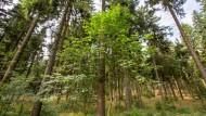 Am Rennsteig im Thüringer Wald
