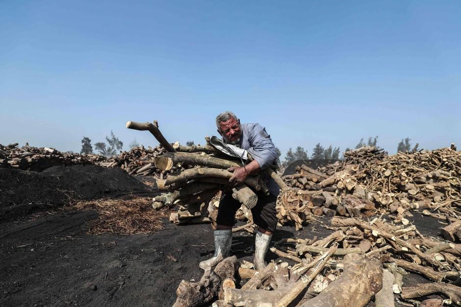 Das Holz, das die Köhler verwenden, beziehen sie von nahegelegenen Städten. Sie müssen es von Ästen befreien, um es dann zum Trocknen stapeln zu können. Das Trocknen dauert normalerweise ein Jahr.