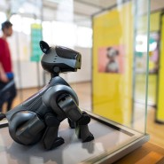 Tut so, als könne er mittels Ohren- und Schwanzbewegungen kommunizieren: Der Unterhaltungsroboter AIBO war zwischen 2006 und 2012 im Handel.