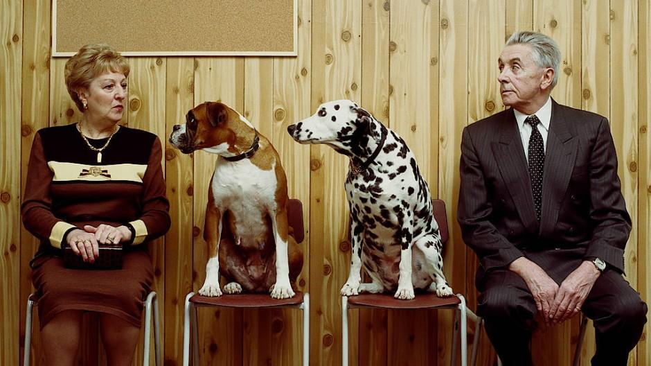 Ziemlich beste Freunde: Dalmatiner und Boxer mit Herrchen und Frauchen