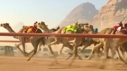 Jockeys bei Kamelrennen durch Roboter ersetzt