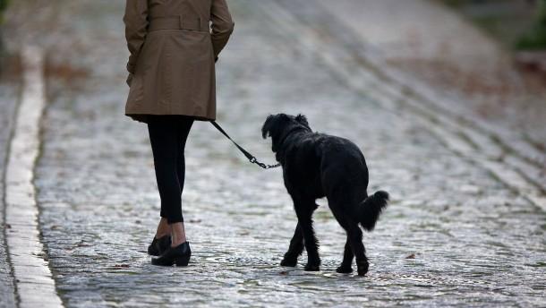 Hunde bringen mehr Steuern als Gewerbe