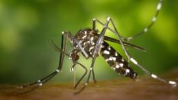 Wieder gefährliches Insekt gesichtet
