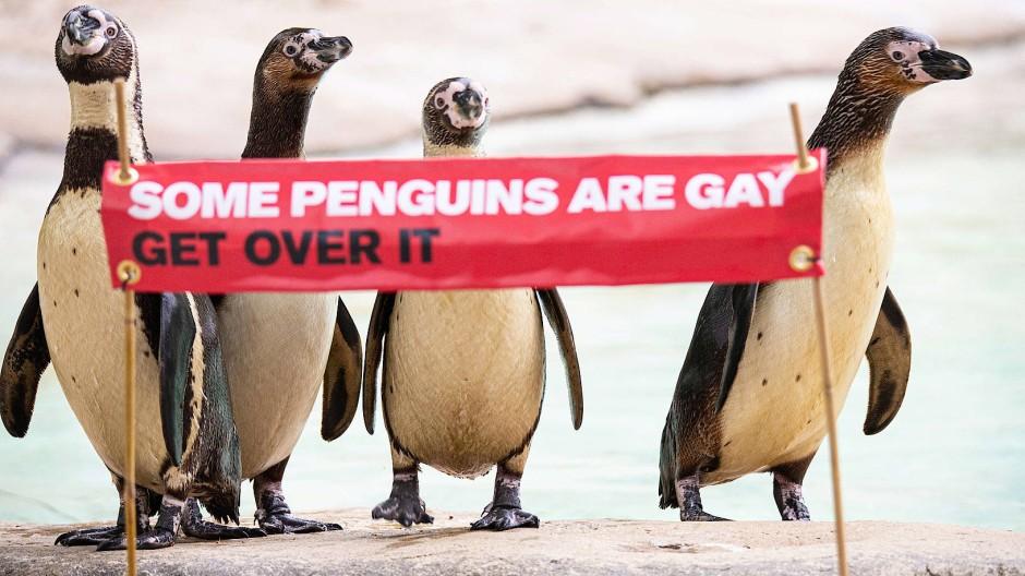 Im Londoner Zoo erinnert ein Banner an die beiden verliebten Pinguine Ronnie und Reggie, die gemeinsam ein Küken aufzogen, bis es flügge war.
